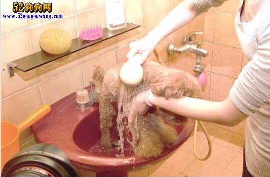 怎么给狗洗澡