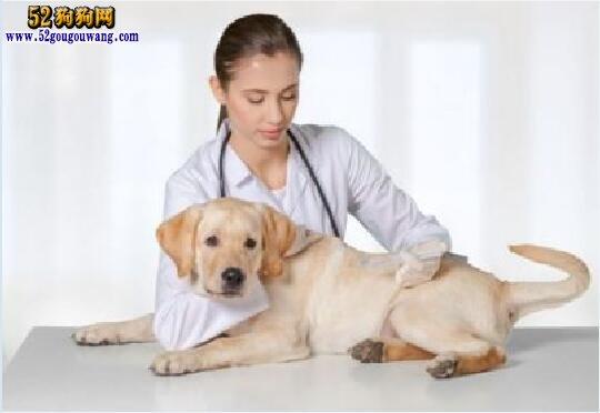 狗狗急性肠胃炎症状有哪些?