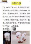 """女子捡到狗向主人索4500元 称"""""""