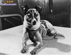世界第一狗:飞向宇宙一去不复返