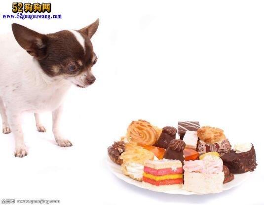 吉娃娃夏季不吃饭无食欲怎么办?