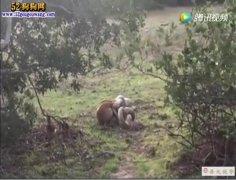 蛇狗大战:实拍宠物狗vs蟒蛇结果