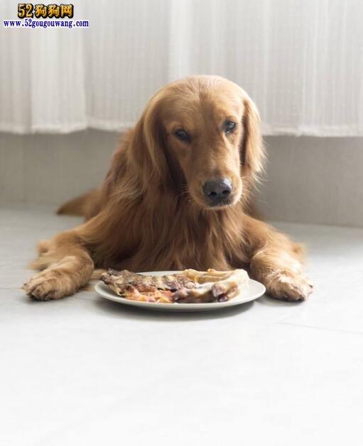 金毛犬厌食怎么办