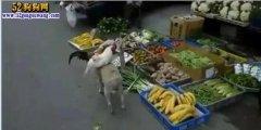 会卖鸡的狗狗!狗狗带二只鸡去市