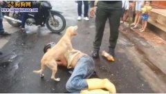 年度最忠诚狗狗:主人醉倒路中央