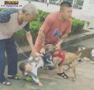 猛犬比特犬咬人事件:重庆宠物店