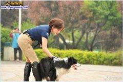 62岁刘晓庆带牧羊犬拍真人秀 傲