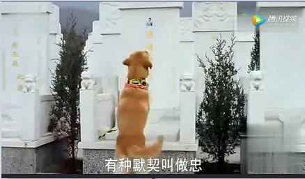 狗狗视频:狗狗和女主人2分多钟视频感动所有人!