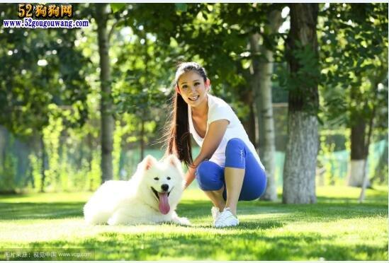 萨摩耶犬怎么训练