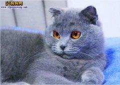 猫咪中毒靠输狗血保命 不知道输