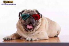 给爱狗人士科普狗知识:关于狗的
