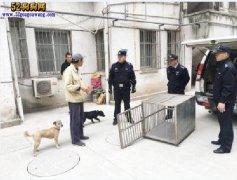 流浪狗泛滥!扬州集中清理12处犬