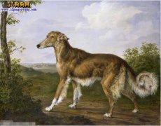 【狗图片】宠物狗图片