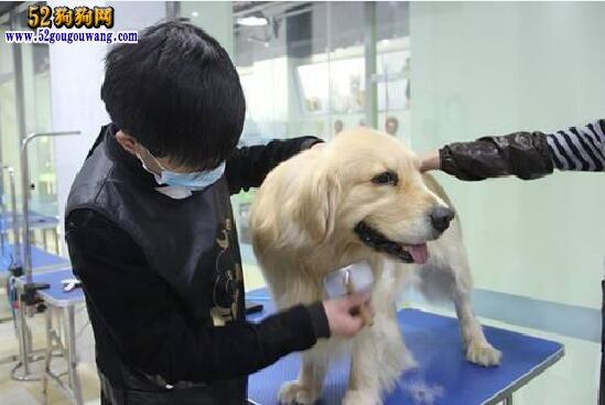 宠物美容学校
