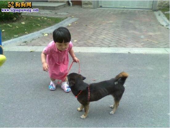 什么狗好养?