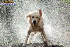 夏季炎热狗狗容易中暑!宠物医生