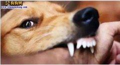 都是狗狗惹的祸!病休警察为宠物