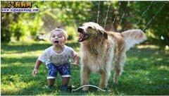 假狂犬病疫苗案续:怎样和狗狗安