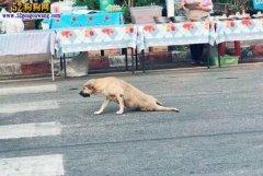 """泰国街头出现""""成精""""的狗狗!装"""