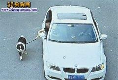 公路上开车遛狗?宠物狗拉肚子怕