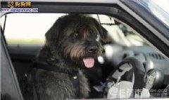 狗狗开车撞大树表情无辜!这车也