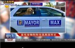 金毛犬当先美国市长怎么回事?厉