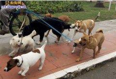 中秋小长假家中宠物狗如何安置?