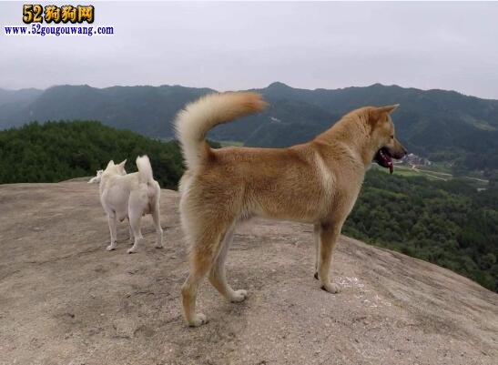 什么狗最干净最好养?
