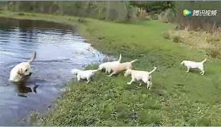 小狗狗视频