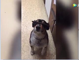 狗视频搞笑视频