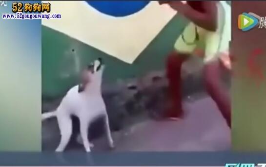 """宠物狗和主人斗舞:看来要挂起一片""""网红狗狗""""风了!"""