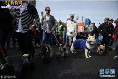 狗狗反脱欧:英国1000名爱狗人士
