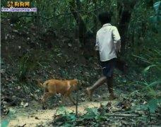 丛林中小男孩的狗狗被大蟒蛇缠住