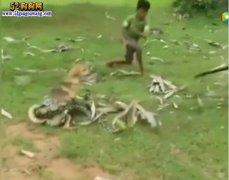 宠物狗被大蟒蛇缠住!三男孩大胆