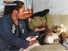 母爱无界限:没妈两猫崽认泰迪狗