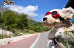 宠物地位比蛙高!假日带狗狗旅游
