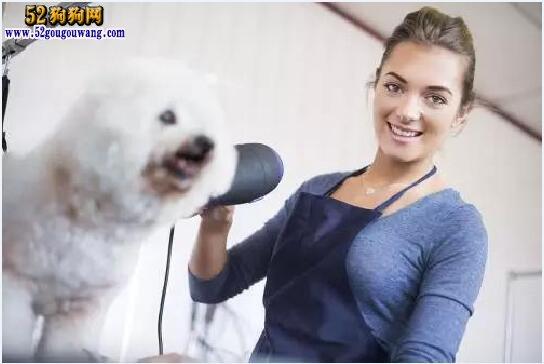 北京宠物美容学校培训价格及选择方法