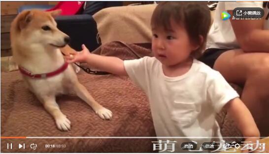 萌狗视频:萌狗视频锦集、看了不许笑!