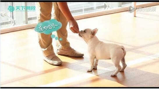 训练狗狗视频:如何从零基础开始训练您的爱犬?