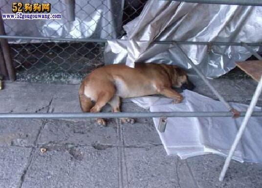 宠物狗咬人拒付医疗费!法院罚10万泰铢!
