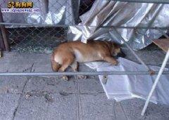 泰国狗咬人纠纷:宠物狗咬人拒付