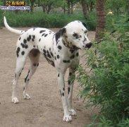 城市禁养犬种名单:首都北京禁止