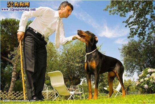 天津市禁止饲养哪些犬种?
