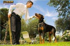 城市禁养犬种名单:天津市禁止饲