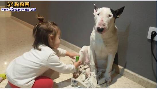 城市禁养犬种名单:杭州、余杭、萧山一带禁止饲养哪些犬种?