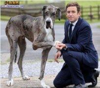 城市禁养犬种名单:青岛禁止饲养