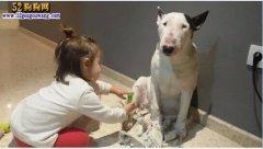 城市禁养犬种名单:杭州、余杭、