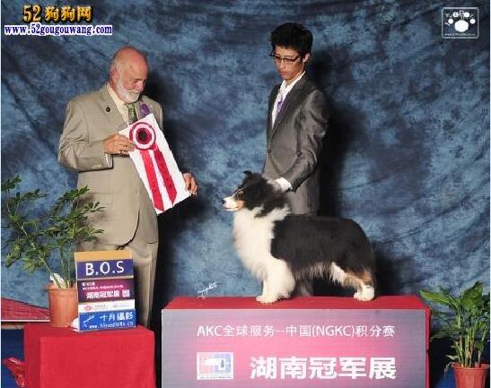 北京喜乐蒂犬舍