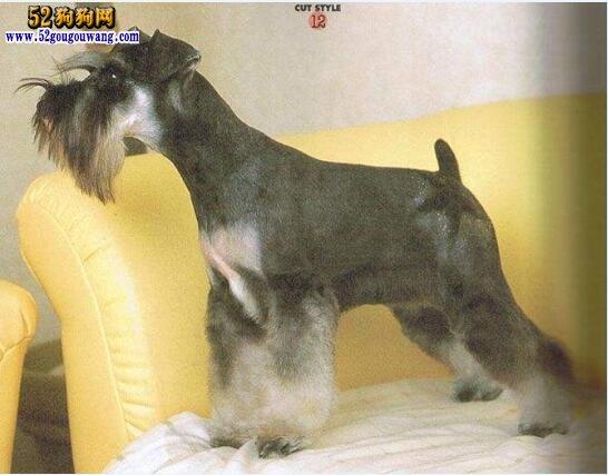 煤气_宠物狗图片、国内常见饲养的宠物狗图片及名称-狗狗图片-52狗狗网