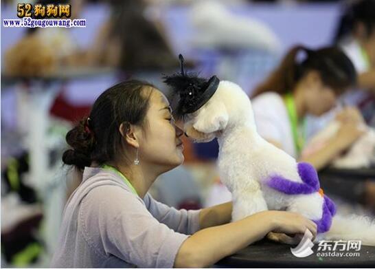 狗狗美容师、当宠物美容师好吗?